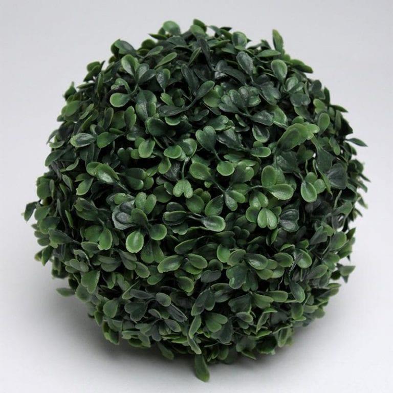Boxwood Spheres