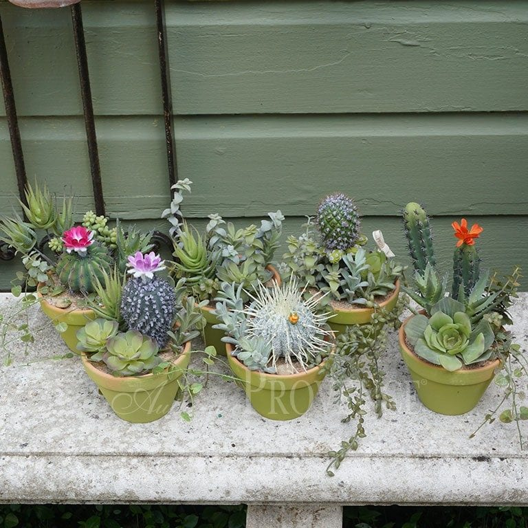 Potted Cacti and Succulent Variety