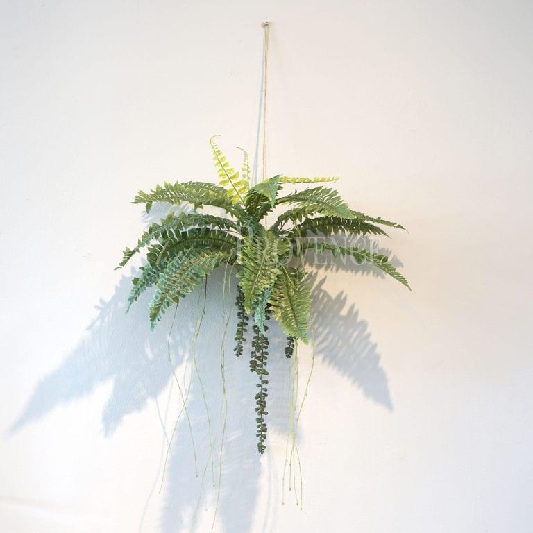 Small Hanging Fern