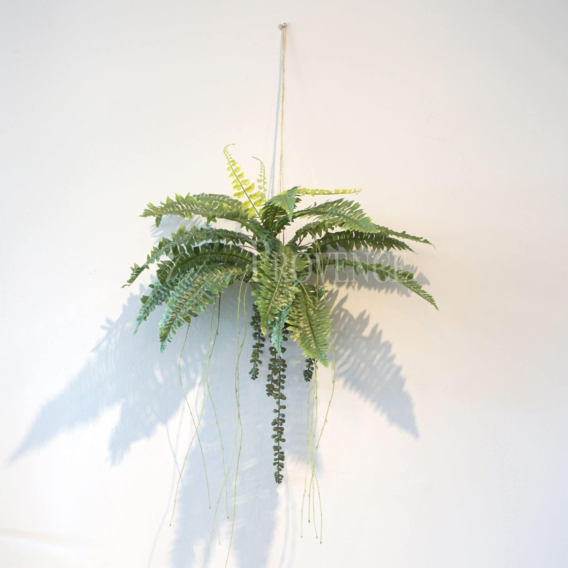 Small Hanging Fern