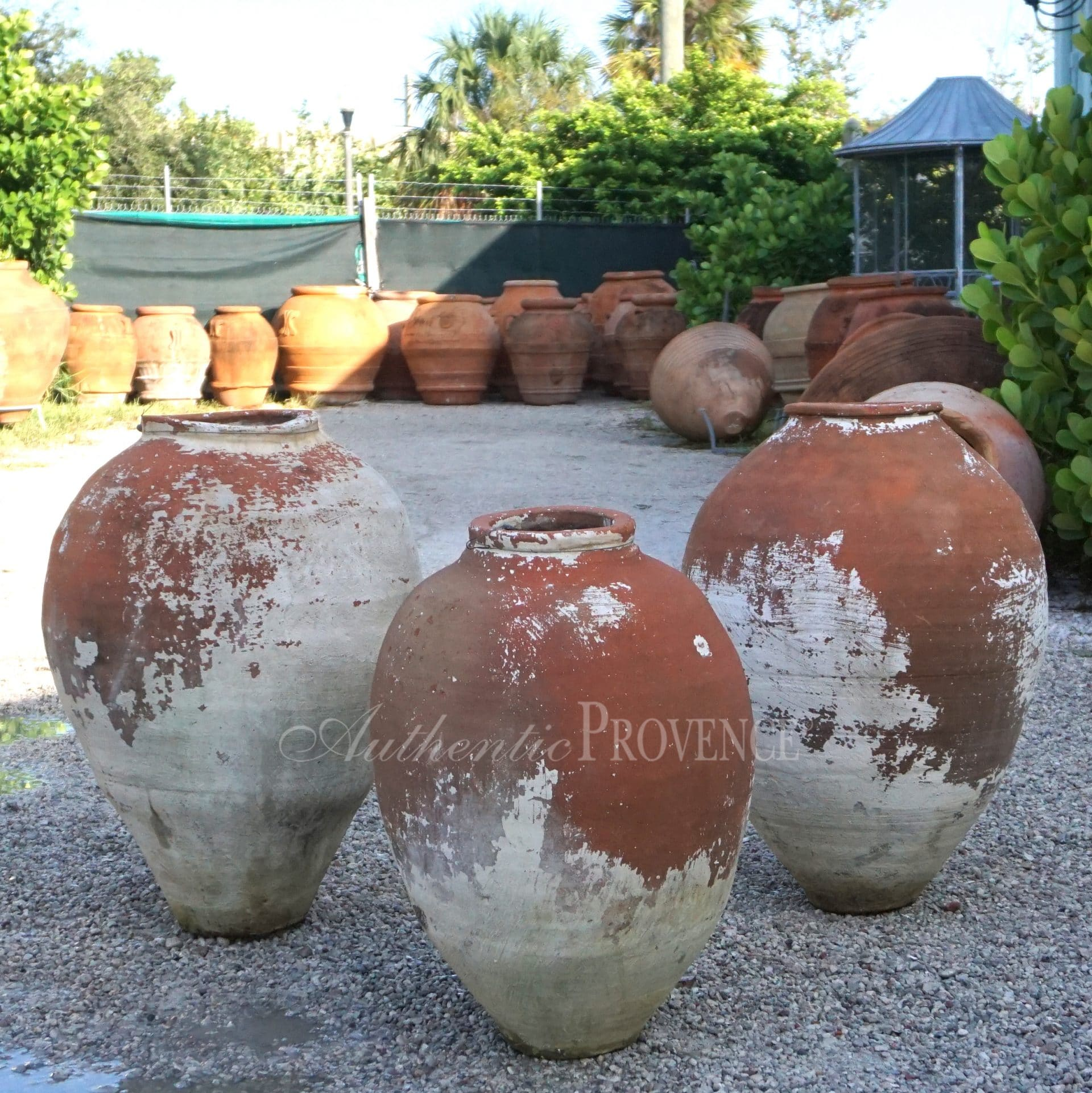 Apollonia Jars