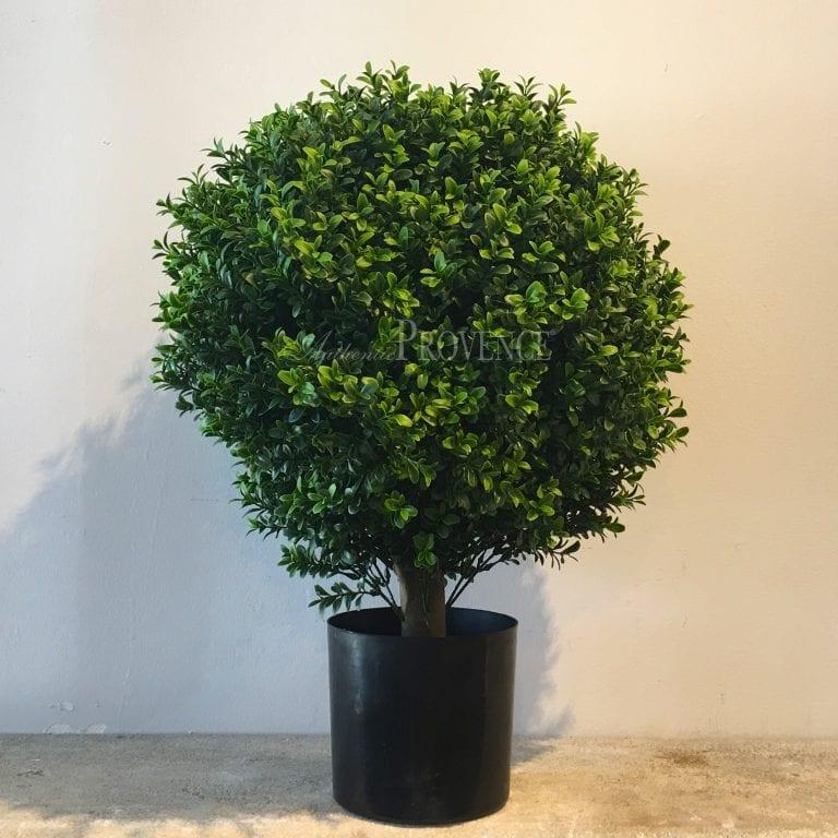 Aloisia Topiary