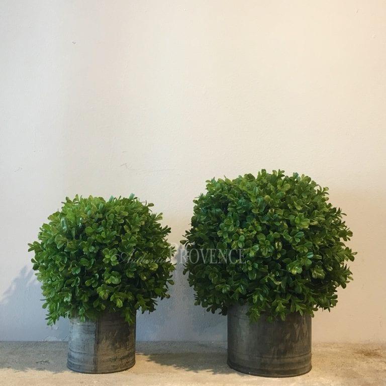 Belva Topiary