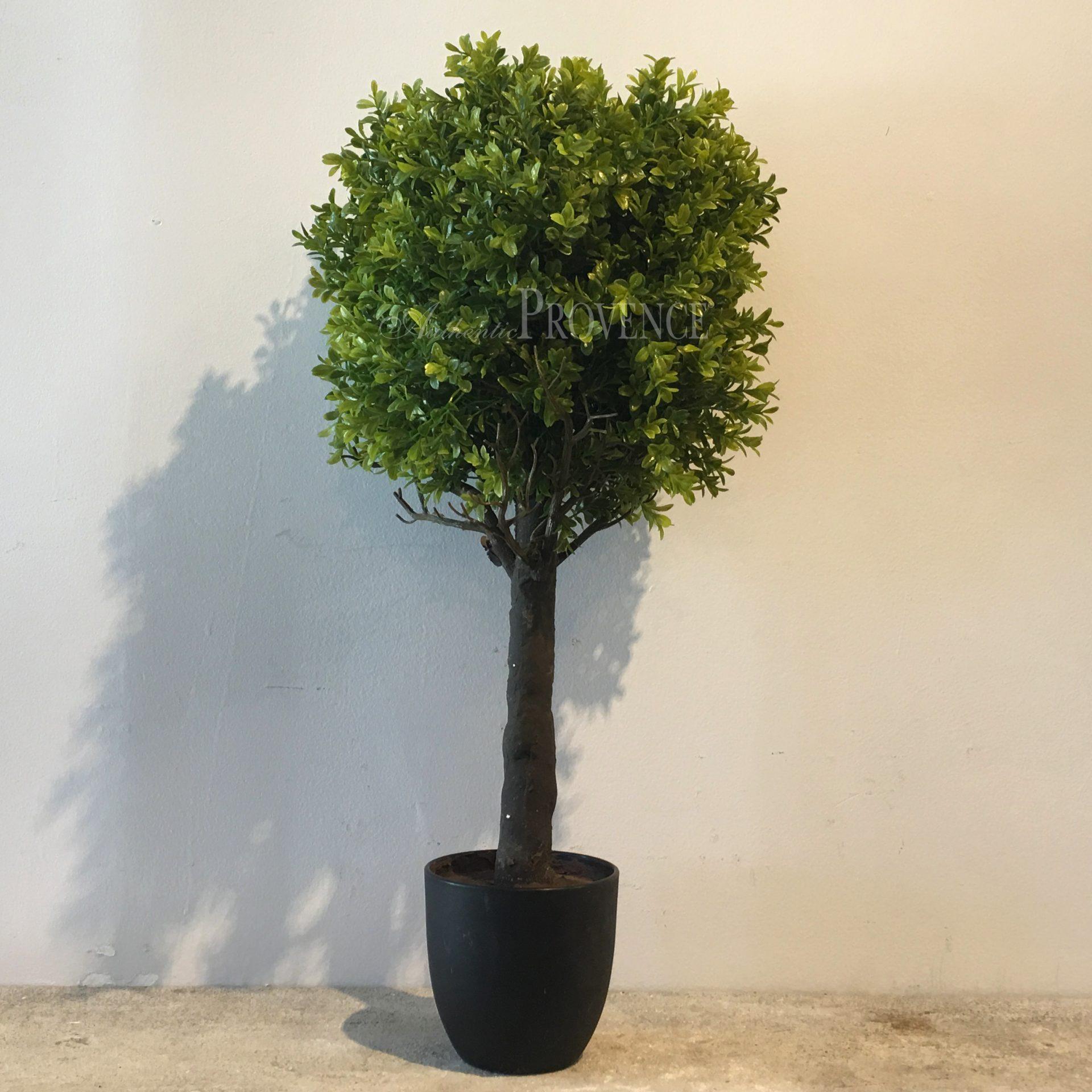 Bluma Topiary