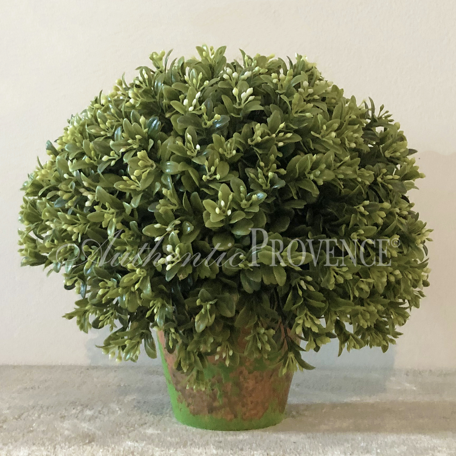 Blooming Boxwood