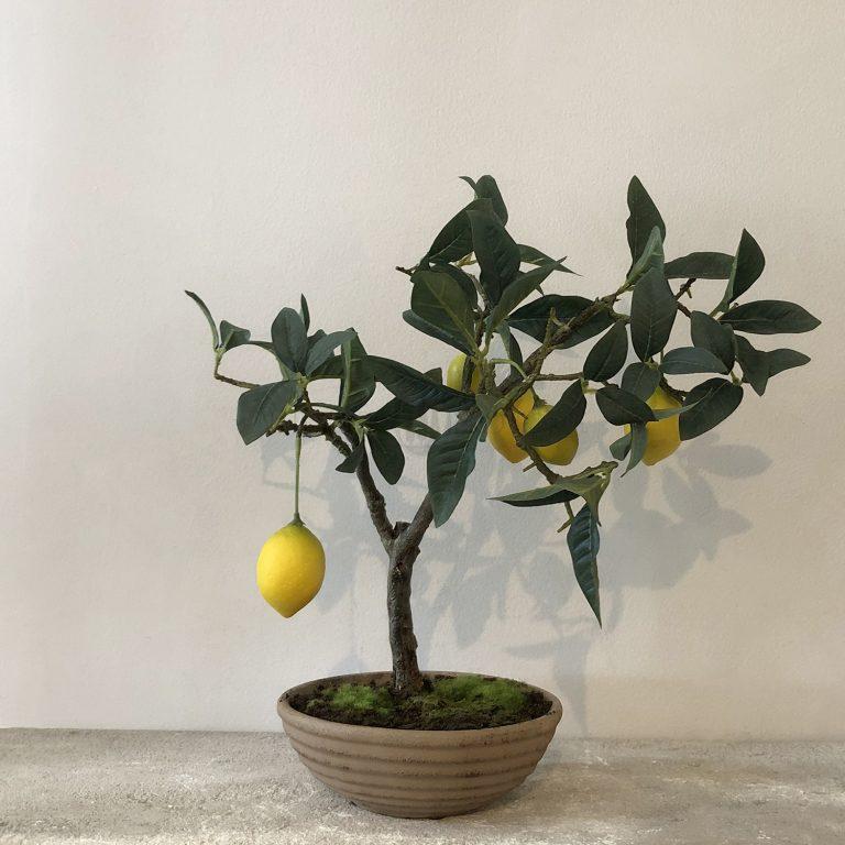Petite Topiaire Citron