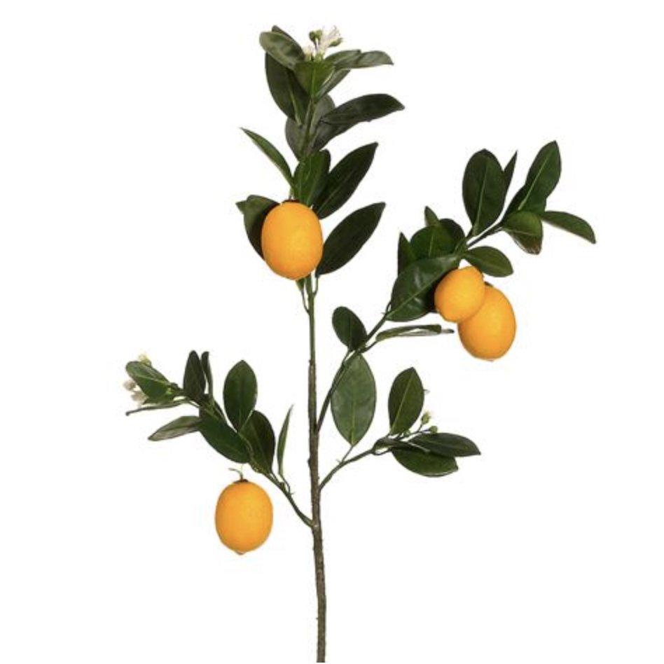 Branche Du Citron