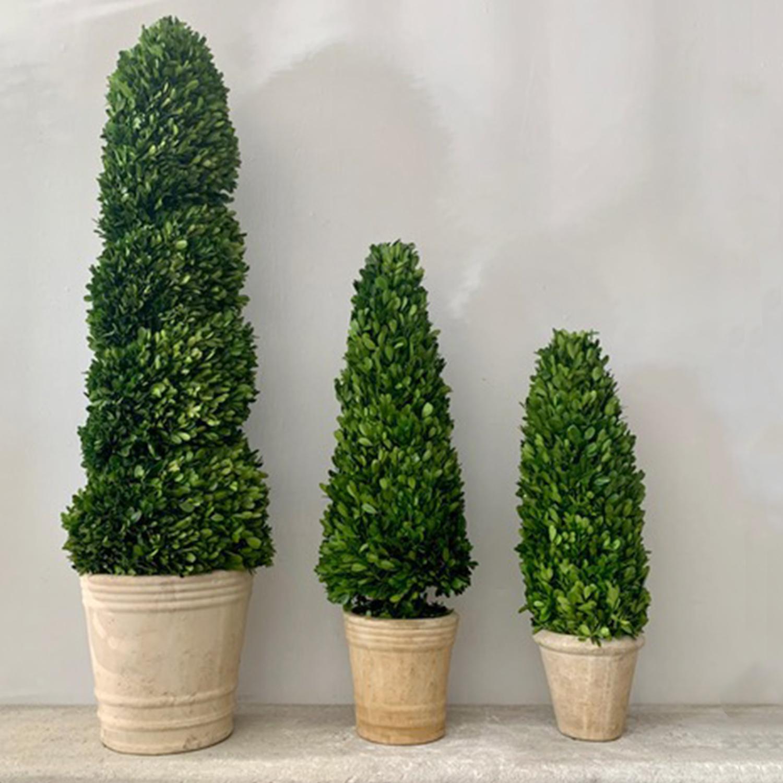 Cone Topiary
