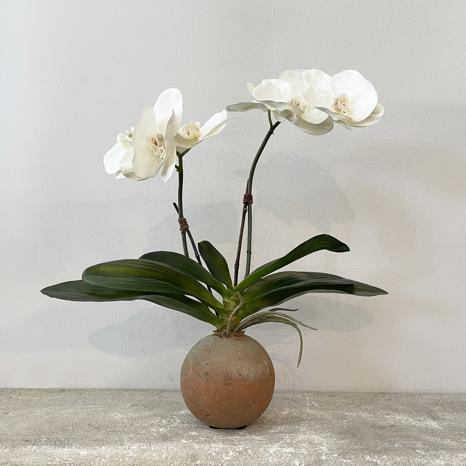 Orchid in Sphere Pot